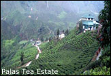 palas tea estate1