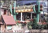 cactus valley1
